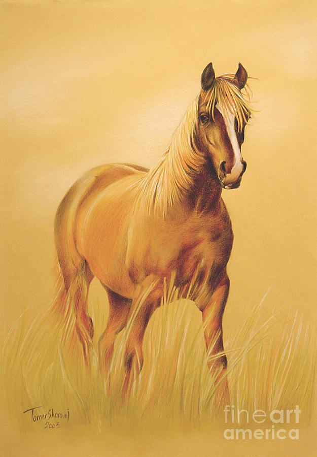 السوق الصيني Horse-portrait-tamer-elsharouni