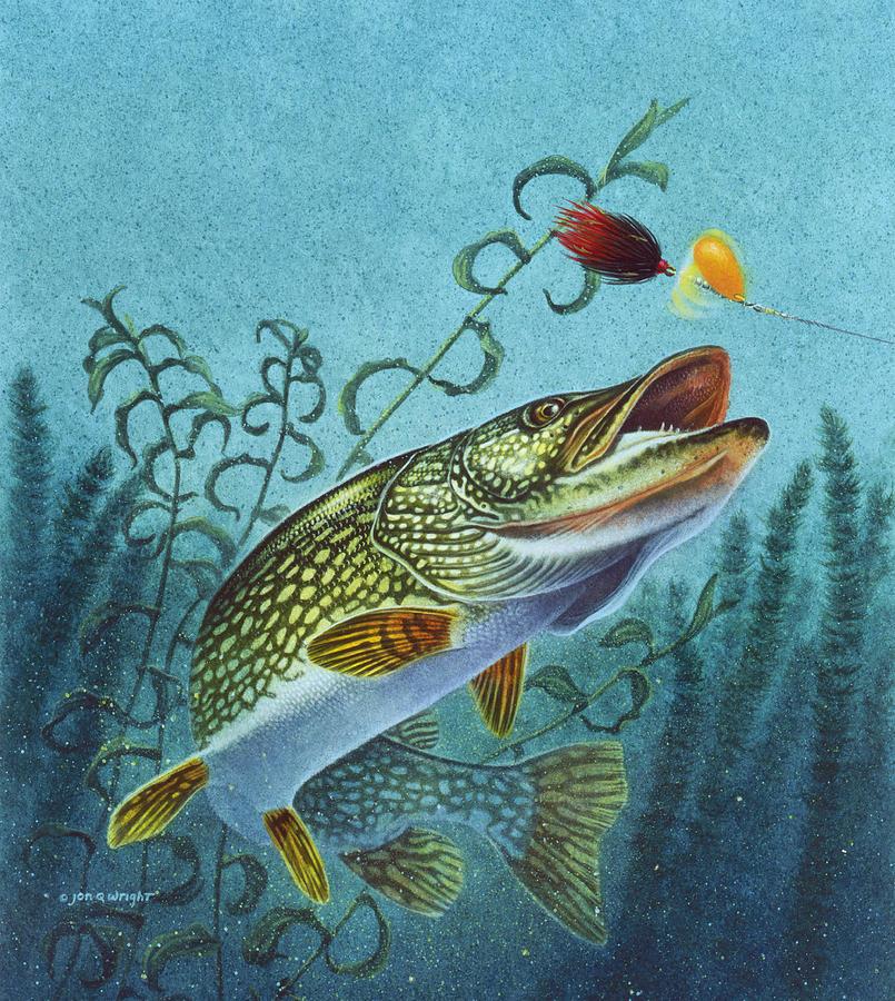 Omaž ribolovcu i ribolovu - Page 6 Northern-pike-spinner-bait-jon-q-wright