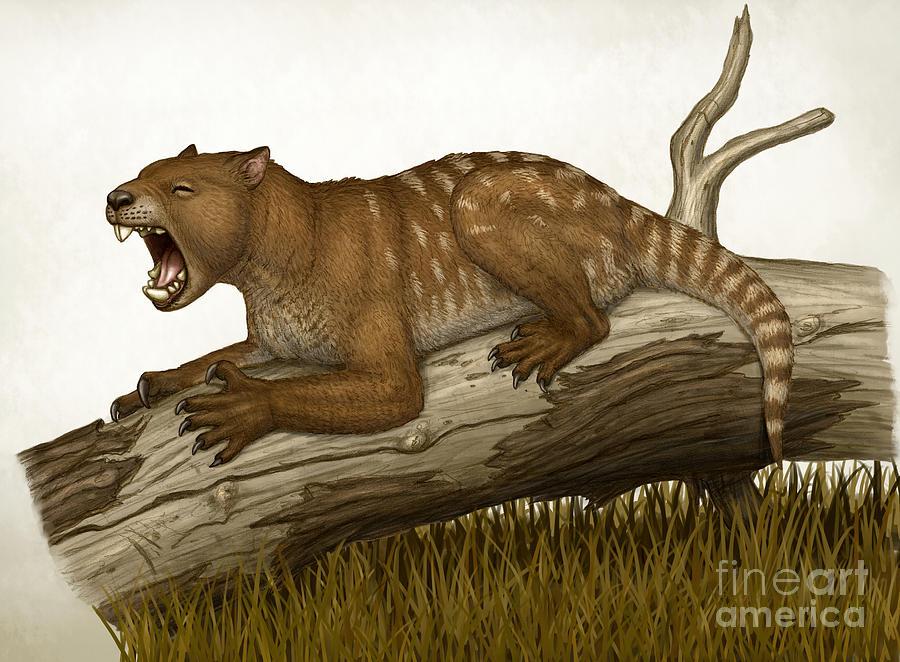 Que haces con un...... - Página 4 Thylacoleo-carnifex-a-marsupial-heraldo-mussolini