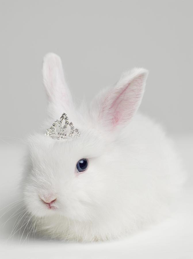 Bestiario de Personajes White-bunny-rabbit-wearing-tiara-close-up-studio-shot-roger-wright