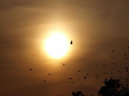 من هنا و هناك Evening-sky-birds-sun-205553