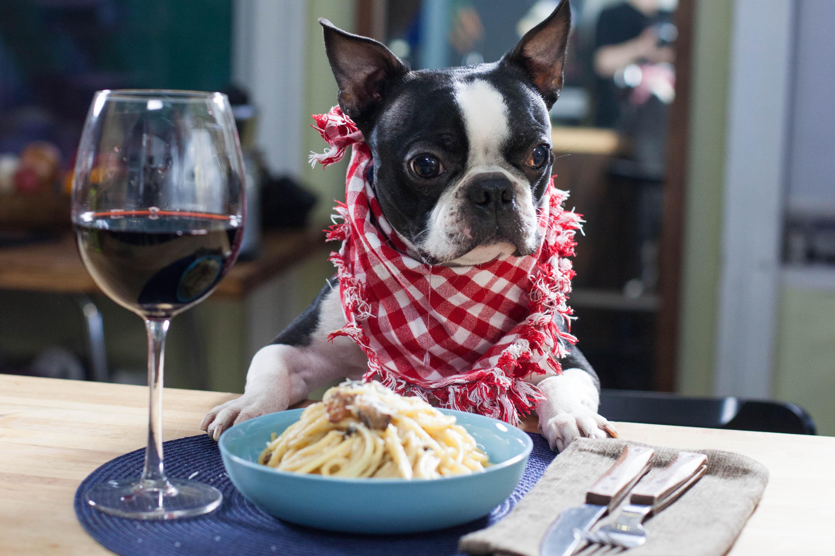 Donner de la nourriture à son chien à table et conséquences - Page 2 2014-04-01-IMG_9879