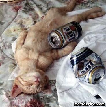 Hommage à Catwoman Chat-alcoolique_lfj