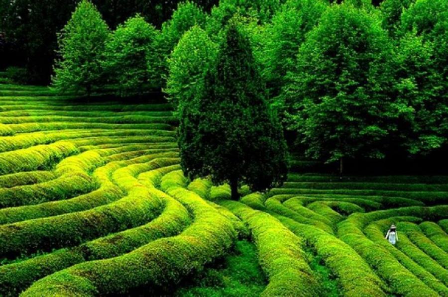 ...El color de la naturaleza... 5_pxp8