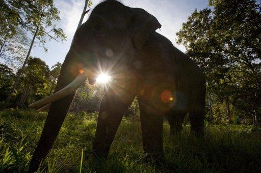 Une compagnie minière canadienne sur le point d'acheter une forêt protégée de Sumatra?! 2fbf327f46a1c9476b4ccbcec01335df