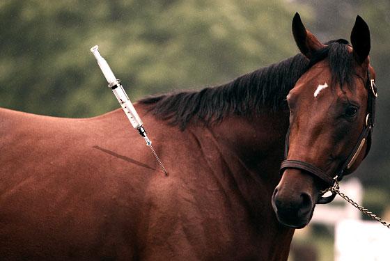 Slike poznatih galopera(konja) 06_bigbrown_lg