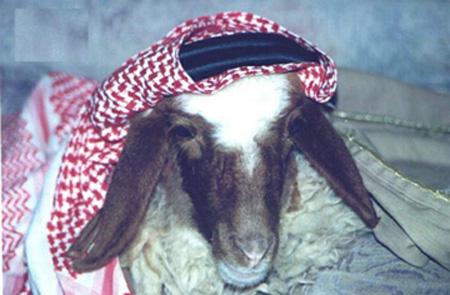 تهنئة للمدير العام السيد أبو هيام بعيد ميلاده ال34 07062007-20511-2