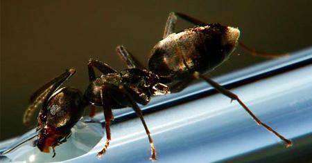 شاهد النملة وهي تشرب الماء 37980