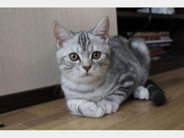 """Конкурс """"Кошка"""" - Страница 3 136998777390"""