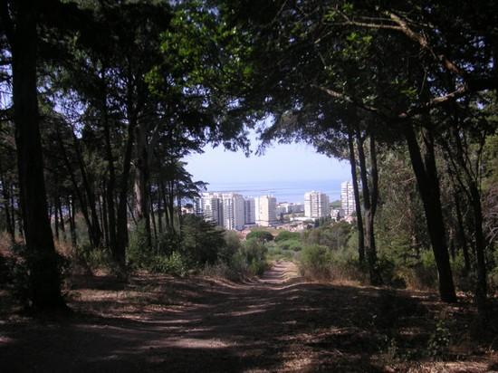 Portugalija 33577_lisbon_parque_florestal_de_monsanto