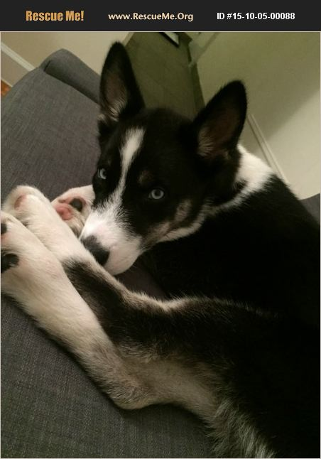 Second dog!!! Help please!  15-10-05-00088x