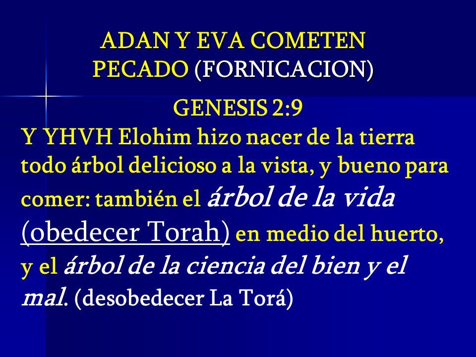 • Castidad Científica (LO QUE NO NOS HAN CONTADO)... Slide_29
