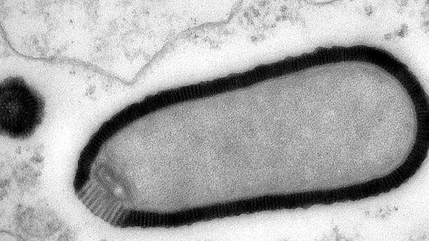 Scientists revive 'giant virus' from Siberian permafrost Art-giant-virus-620x349