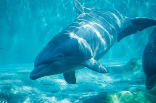 معلومات عن الدلافين Dolphin_0