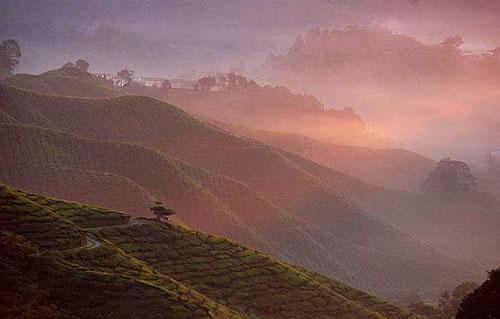 Khoảnh khắc đẹp của Đông Nam Á 146042646_Gunung_Brinchang__Malaysia