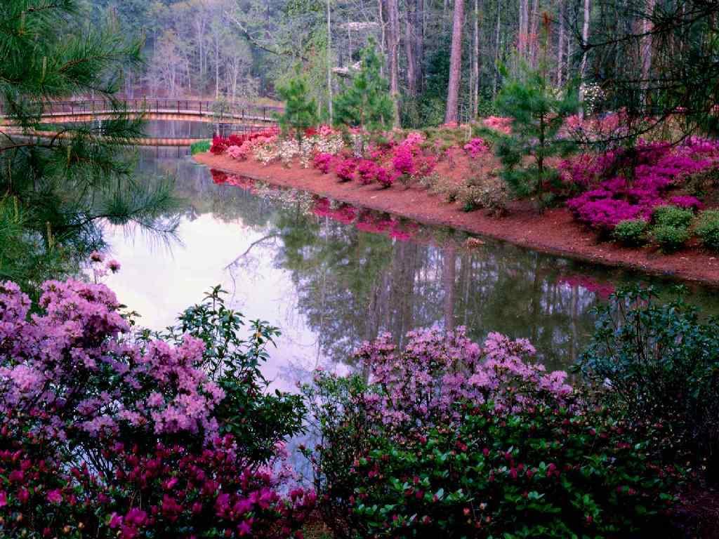 Rêver avec le réel, paysages - Page 3 Jardin_fleuri.36880