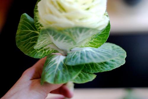 Câu lạc bộ handmade: Hướng dẫn cách cắm hoa và thuyết trình cắm hoa ngày 20/10 Huong-dan-cach-cam-hoa-va-thuyet-trinh-cam-hoa-ngay-2010_1412824315_16