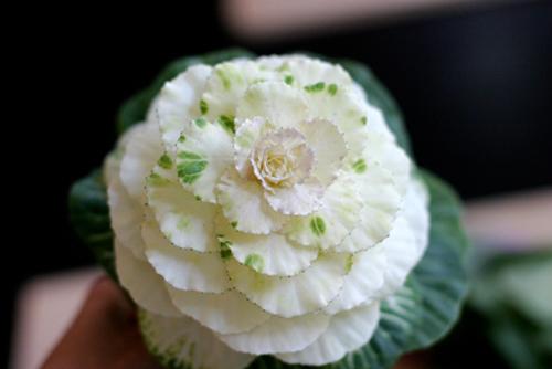 Câu lạc bộ handmade: Hướng dẫn cách cắm hoa và thuyết trình cắm hoa ngày 20/10 Huong-dan-cach-cam-hoa-va-thuyet-trinh-cam-hoa-ngay-2010_1412824315_17