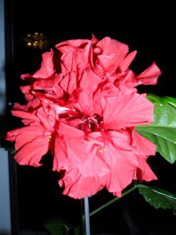 Наши любимые домашние растения! - Страница 2 961807_m