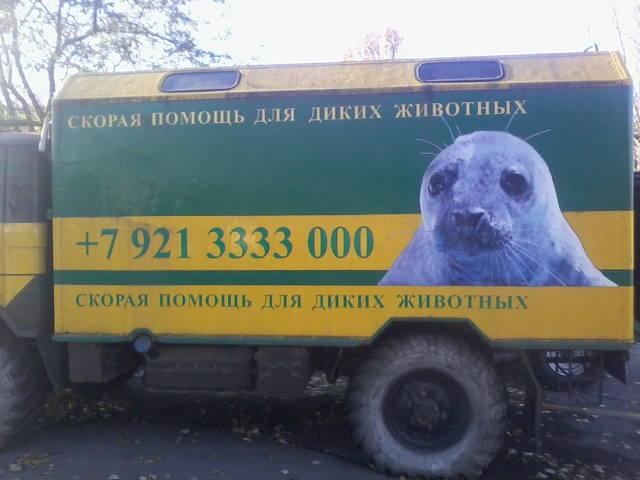 Ветеринарные клиники Санкт-Петербурга 3340654_m