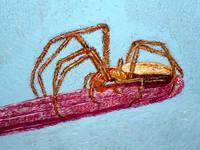 Роспись на сырой яичной скорлупе(гуашь)на заказ - Страница 3 4452045_s