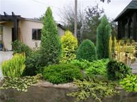 Участок с ноля для нулевого садовода-огородника - Страница 11 4539059_s