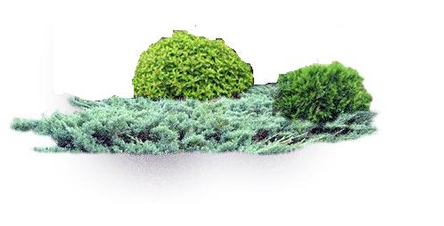 Участок с ноля для нулевого садовода-огородника - Страница 11 4539229_m
