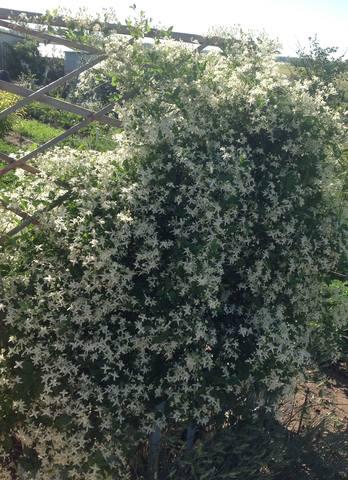 Садовые многолетние цветы - давайте меняться - Страница 5 5487523_m