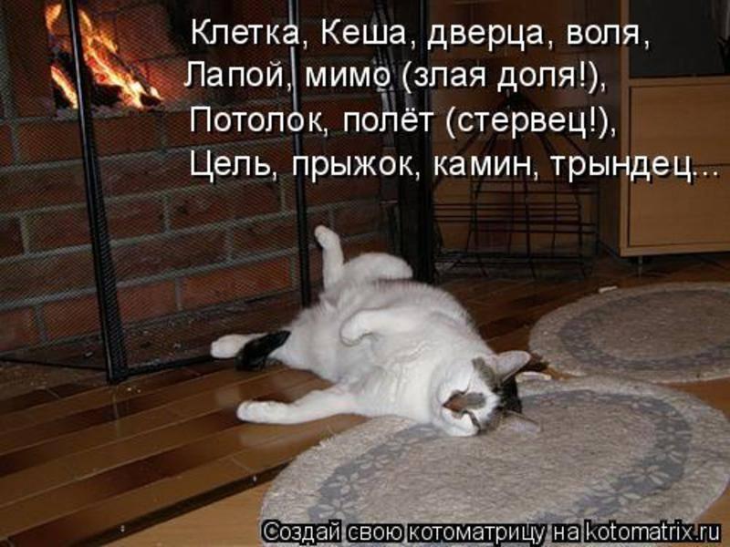 Кошки (Cats) - Page 4 6473252_m
