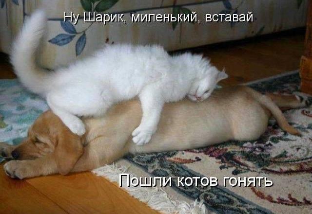 Кошки (Cats) - Page 4 6479985_m