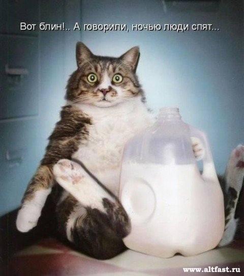 Кошки (Cats) - Page 4 6479984_m