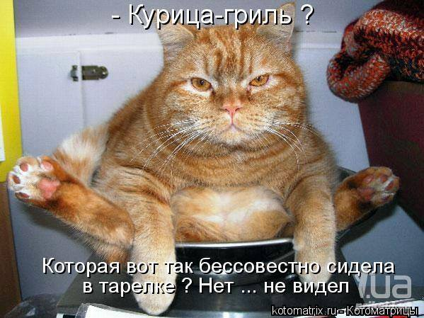 Кошки (Cats) - Page 4 6479982_m