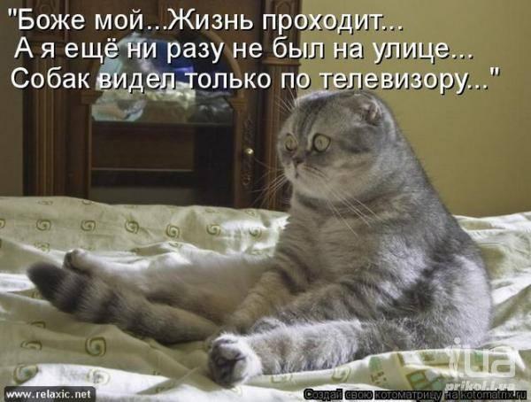 Кошки (Cats) - Page 4 6479983_m