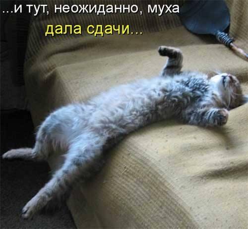 Кошки (Cats) - Page 4 6479990_m
