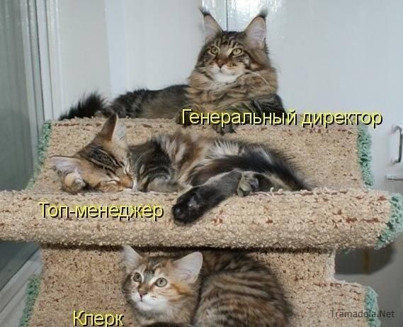 Кошки (Cats) - Page 4 6479987_m