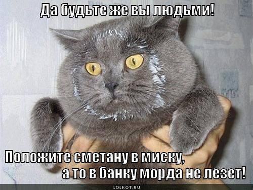 Кошки (Cats) - Page 4 6479986_m