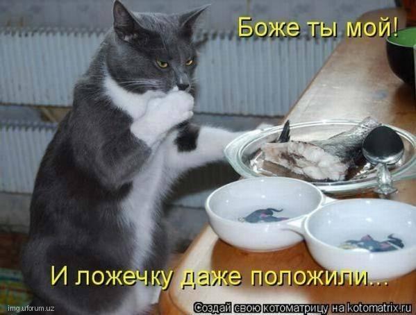 Кошки (Cats) - Page 4 6479989_m
