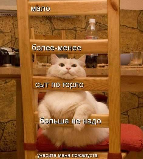 Кошки (Cats) - Page 4 6479988_m
