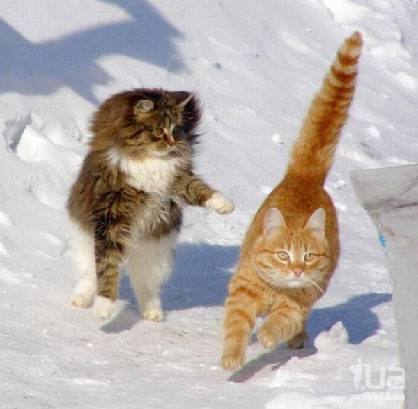 Кошки (Cats) - Page 4 6480112_m