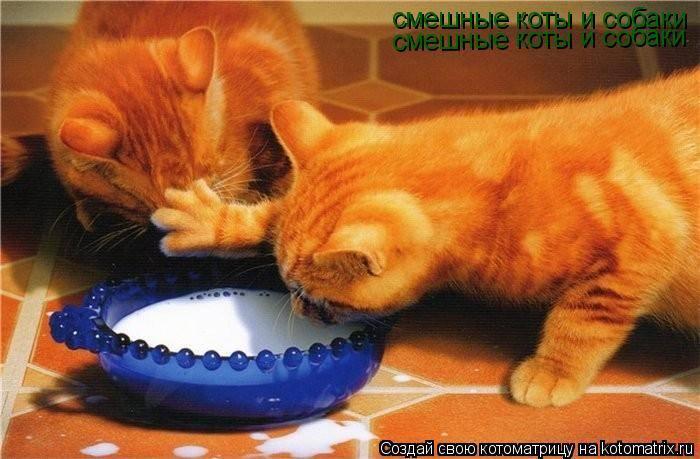 Кошки (Cats) - Page 4 6480113_m