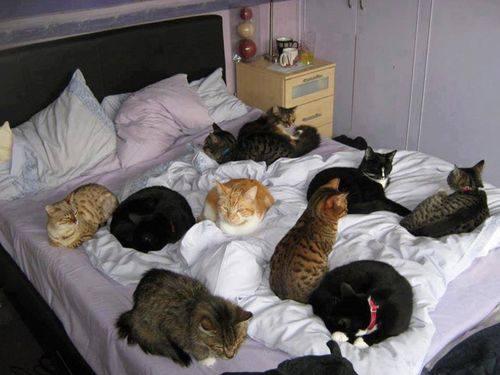 Кошки (Cats) - Page 5 8225390_m
