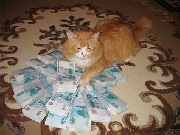 Кошки (Cats) - Page 5 8225392_m