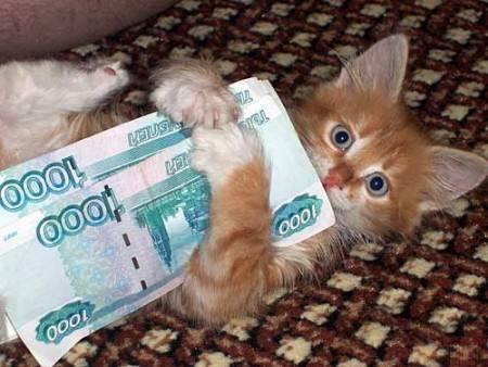 Кошки (Cats) - Page 5 8225391_m