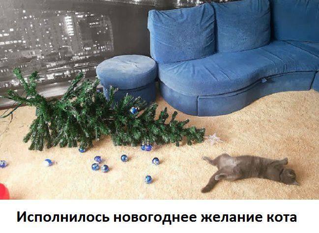Кошки (Cats) - Page 5 8225393_m