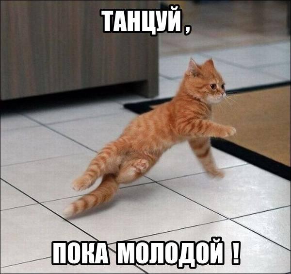 Кошки (Cats) - Page 5 8225397_m
