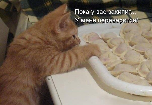 Кошки (Cats) - Page 5 8225394_m