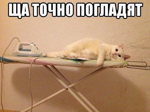 Кошки (Cats) - Page 5 8225396_m
