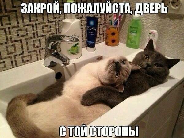 Кошки (Cats) - Page 5 8225398_m