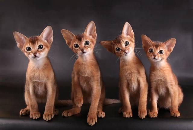 Кошки (Cats) - Page 5 9458147_m