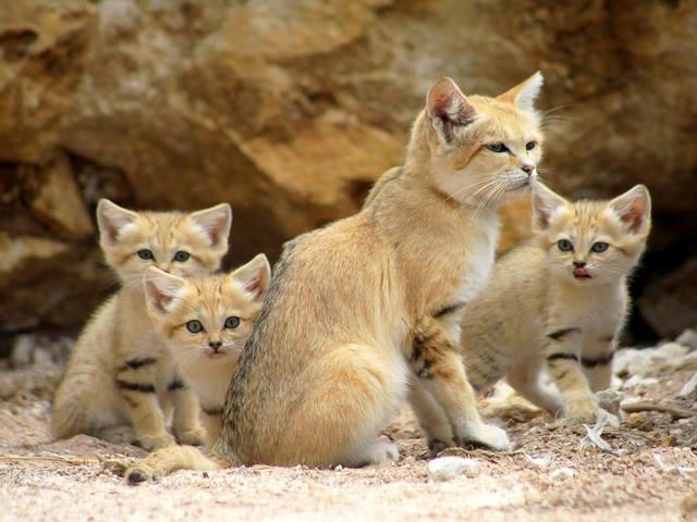 Кошки (Cats) - Page 5 11022957_m